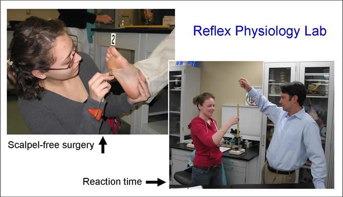 reflex laboratory activity
